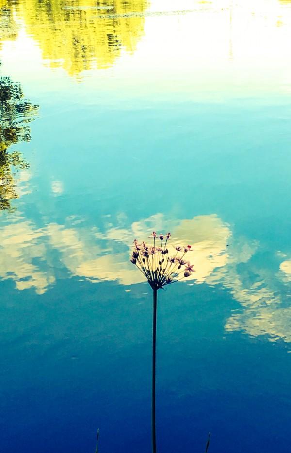 Blue Skies by VortexStyle