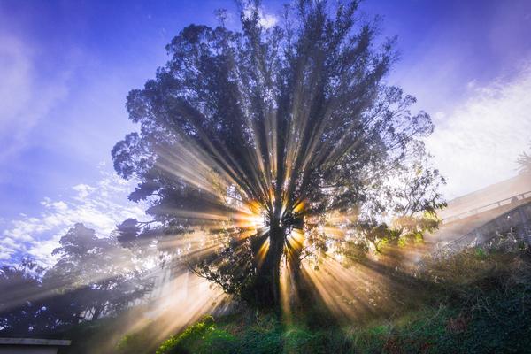 Rays of Light Digital Download