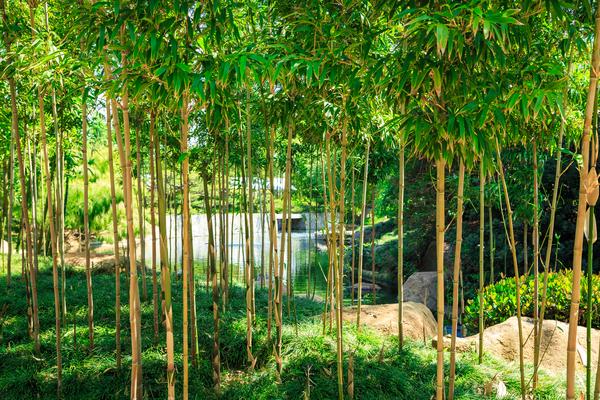 Bamboo Digital Download