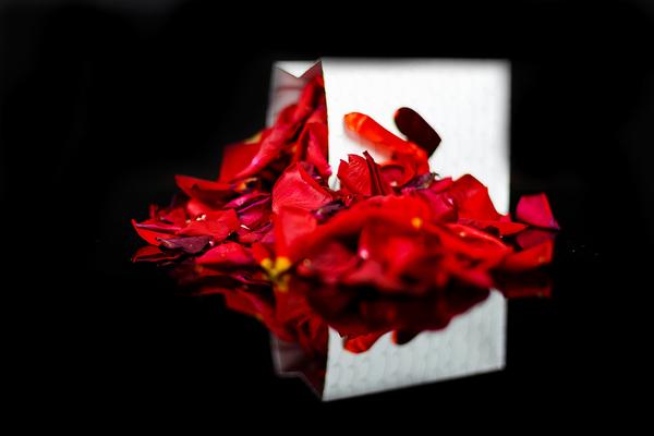 Rose Petals Digital Download