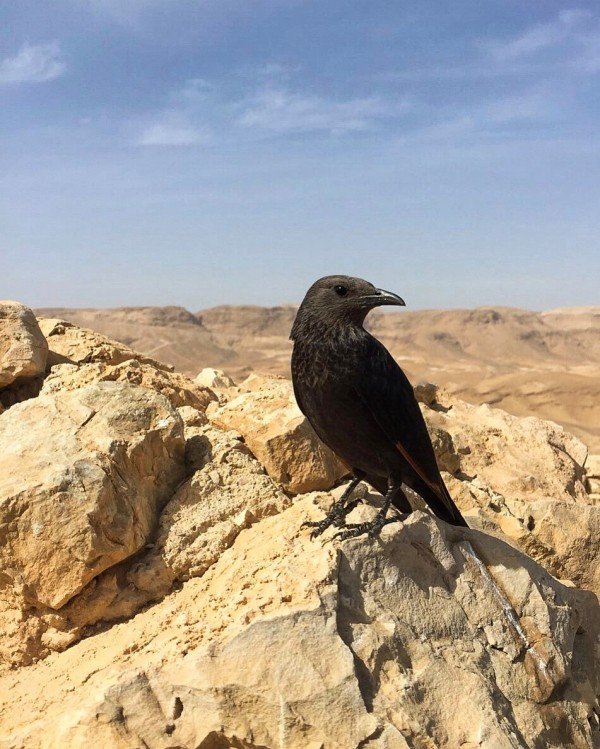 Trip in Israel by anartlova