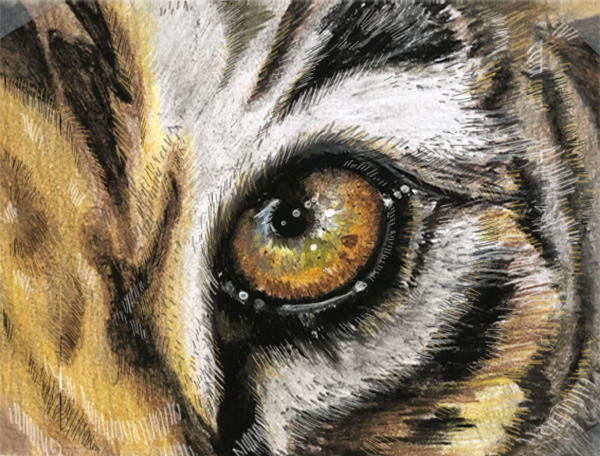 tiger by anartlova