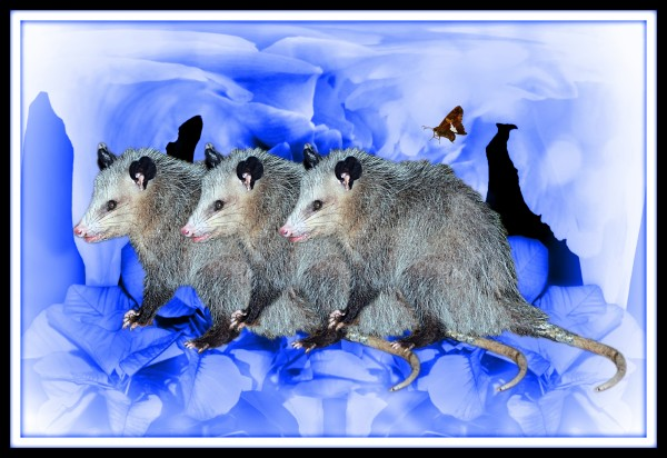 Party Of Possums by constance lowery