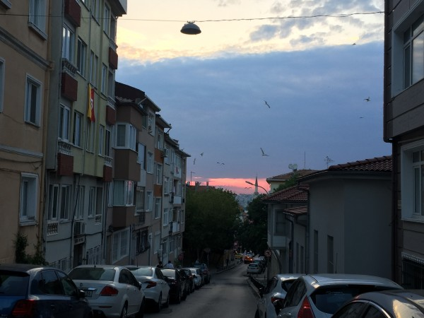 IMG_7086 by day