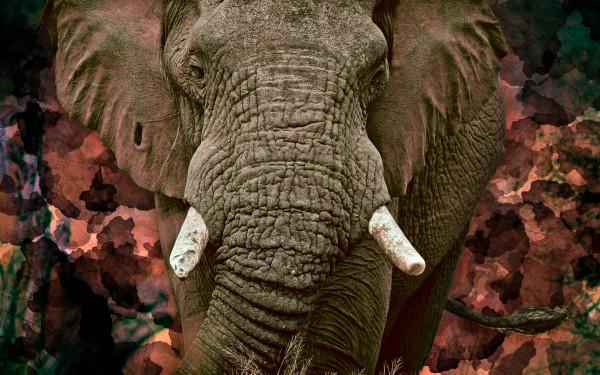AUTUMN by inXS Wildlife