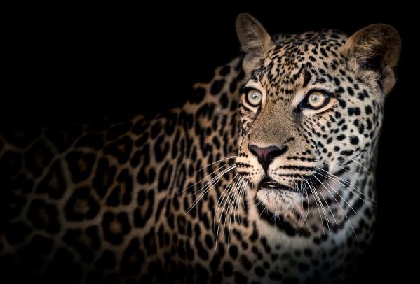 ELUSIVE by inXS Wildlife