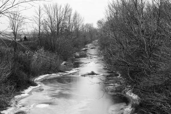 Frozen Wetlands  Print