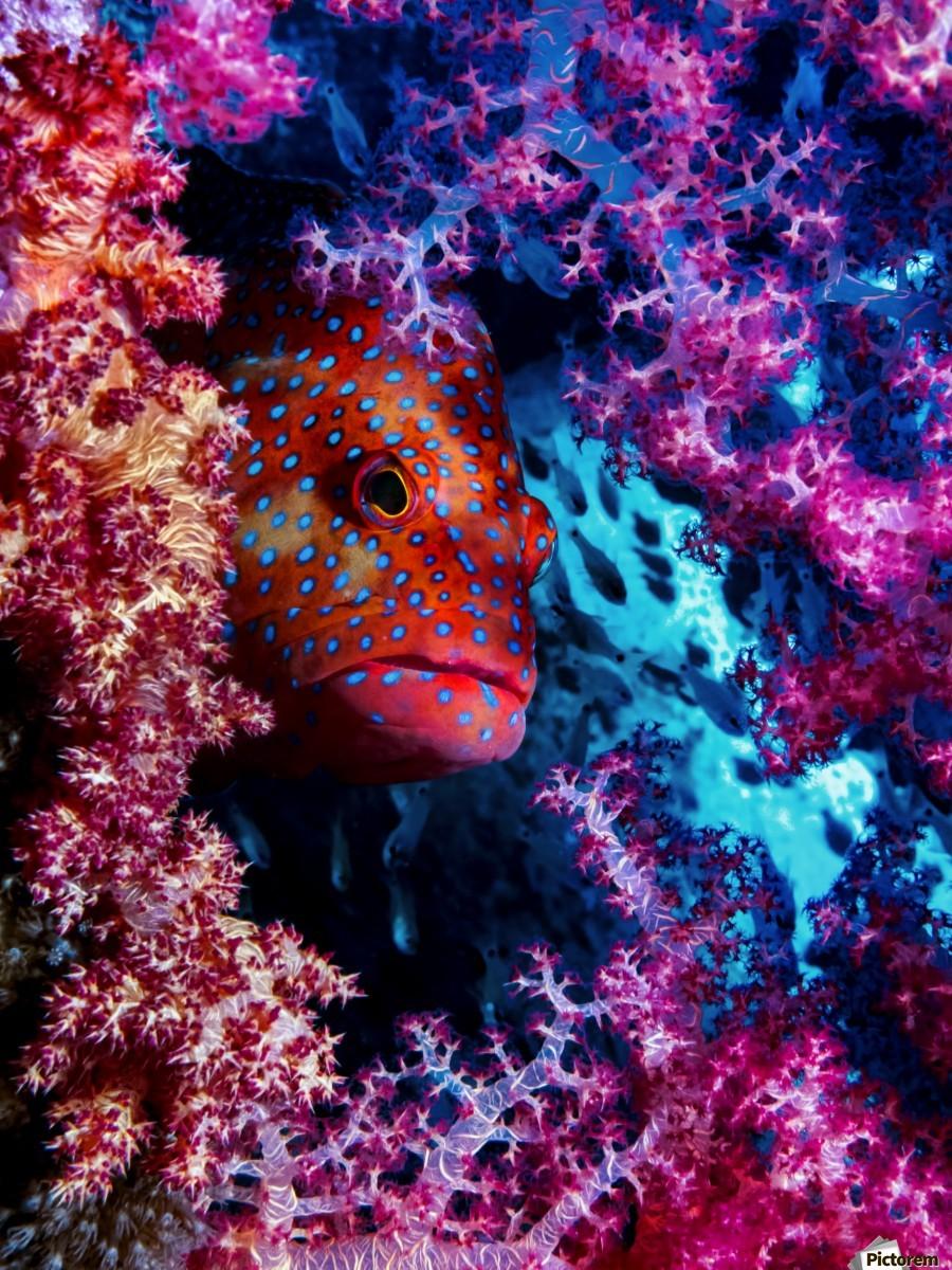 Coral Hind  Print