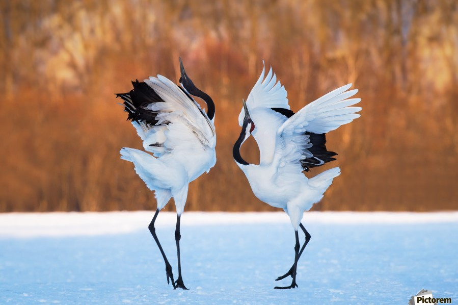 The dance of love  Print
