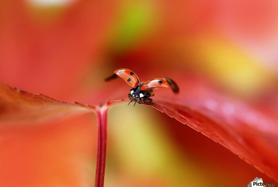 Ladybird in autumn  Print