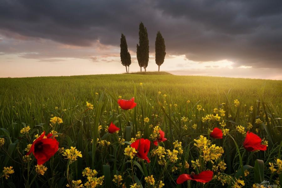 Blooming Tuscany  Print