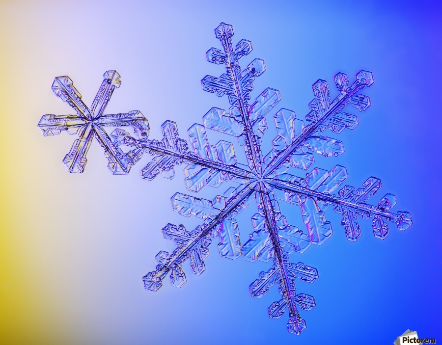 Photomicroscopic close up of two snowflake crystals, Alaska  Print
