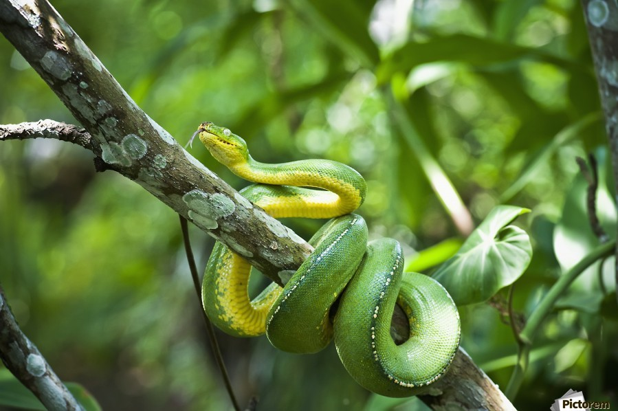 Best Snake Rooms