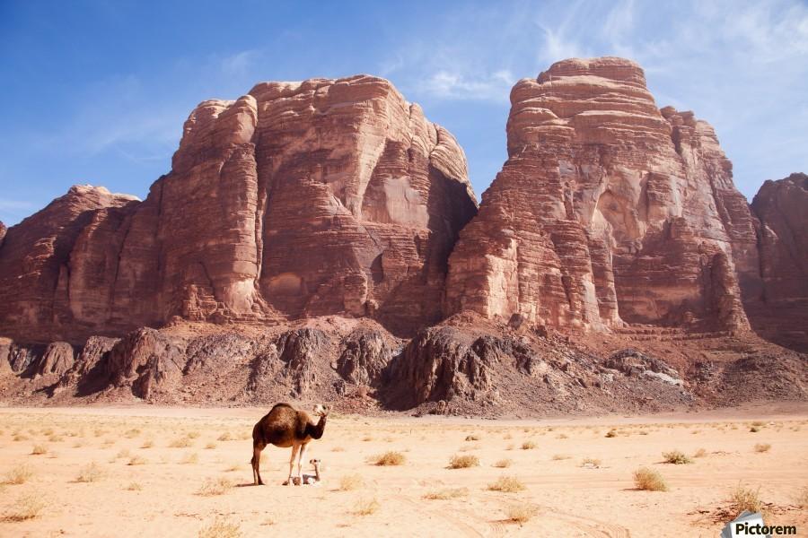 Baby camel and mother; Wadi Rum, Jordan  Print