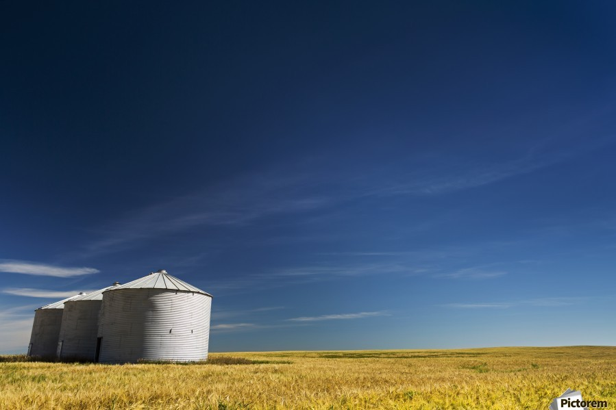 Large metal grain bins in a barley field with blue sky and wispy clouds; Acme, Alberta, Canada  Print