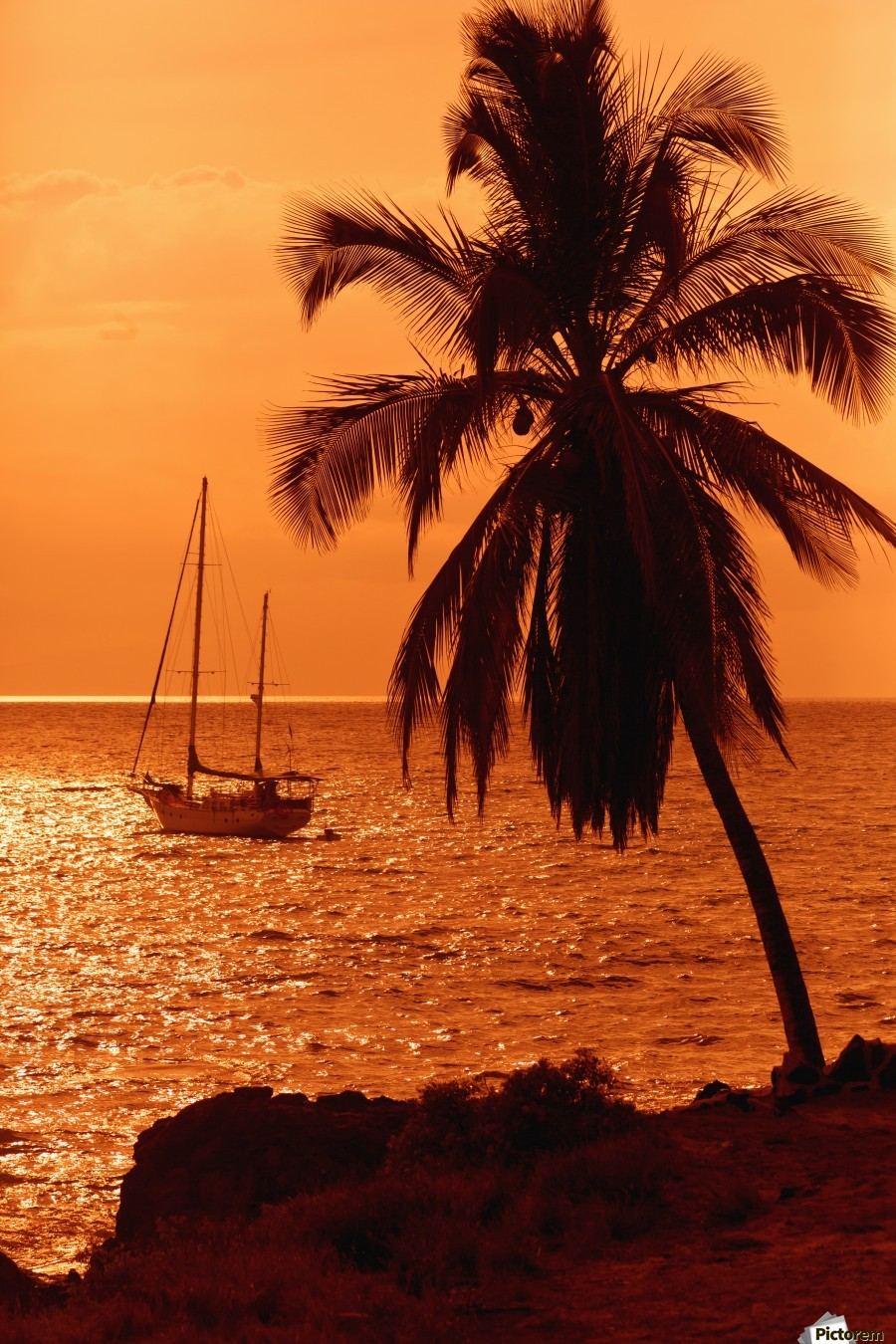 Sailboat and palm tree at sunset; Kihei, Maui, Hawaii, United States of America  Print