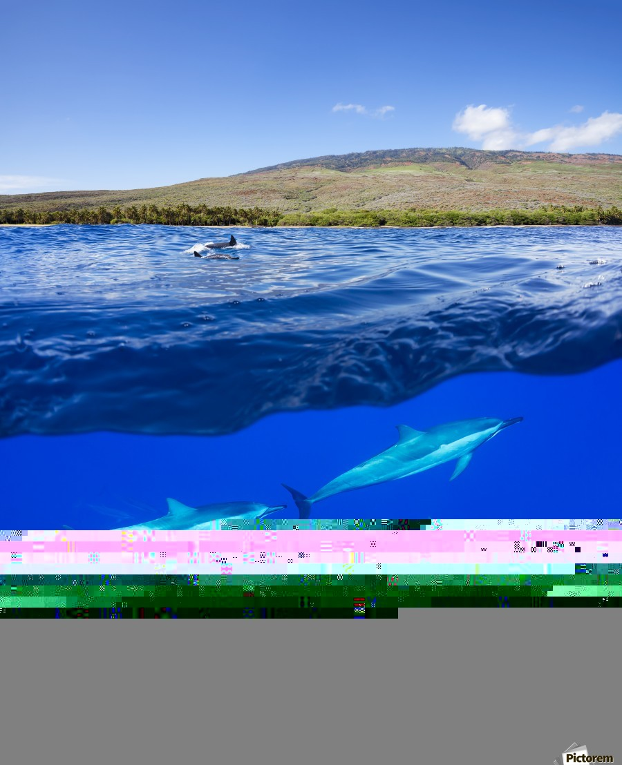 A split view of spinner dolphin (Stenella longirostris) below water and the island of Lanai above; Hawaii, United States of America  Print
