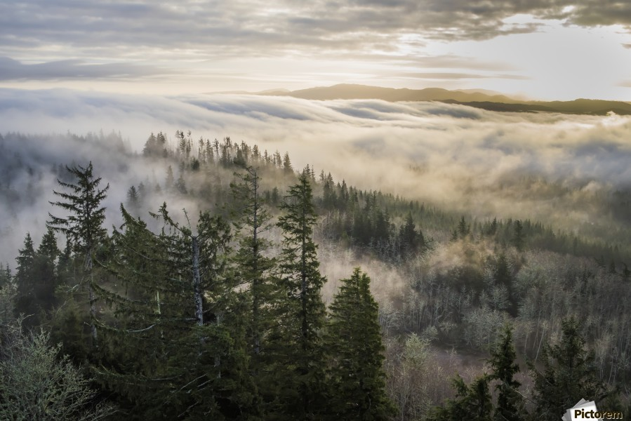 Fog and forest seen from Coxcomb Hill; Astoria, Oregon, United States of America  Print