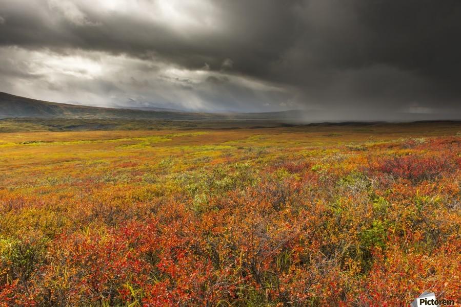 A storm passes over the bright colors of autumn in Denali National Park & Preserve, Alaska.  Print