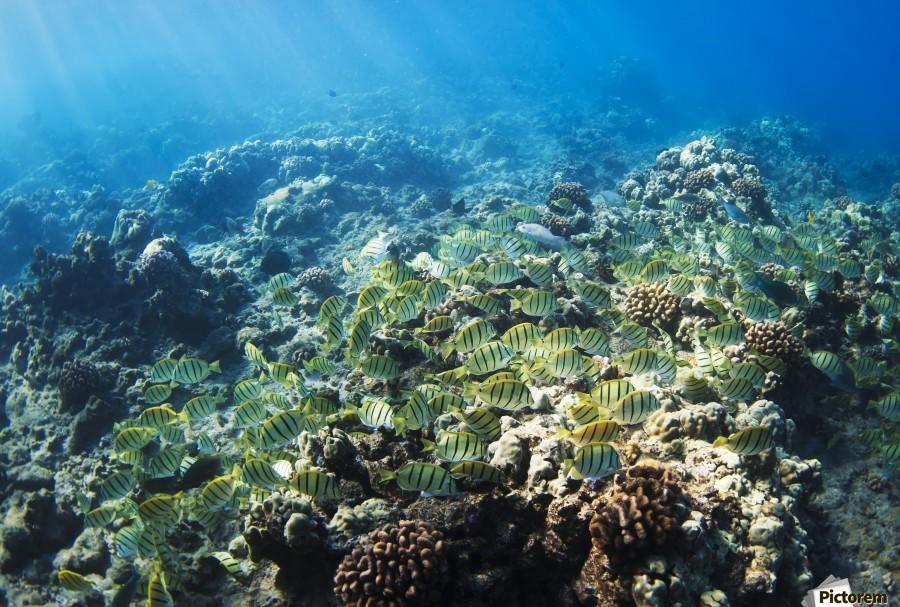 Tropical Reef in Hawaii-  Print