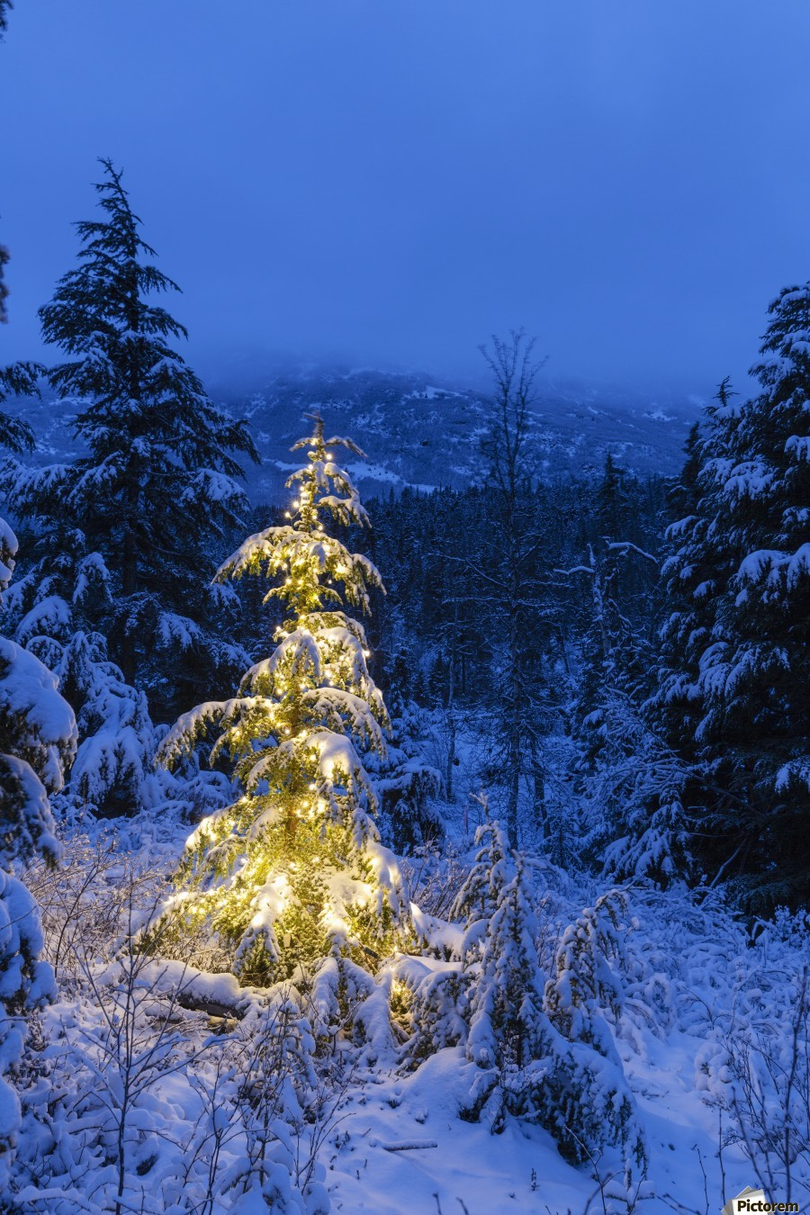 A festive Mountain Hemlock evergreen tree strung with white lights and covered in snow in a wintery landscape, Kenai Mountains; Moose Pass, Alaska, United States of America  Print