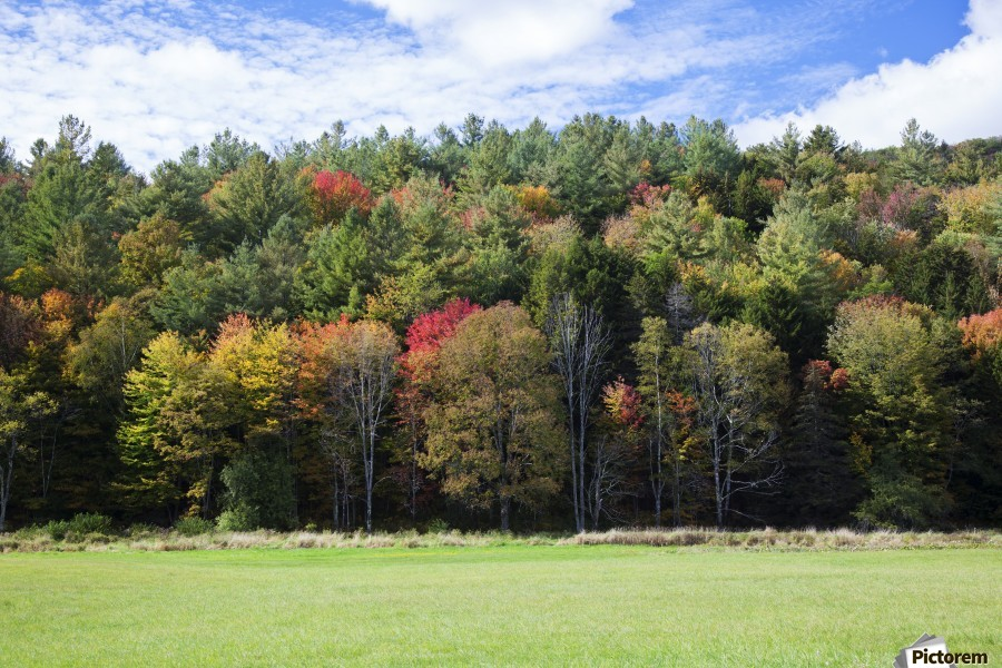 Colourful trees in autumn; Woodstock, Vermont, United States of America  Print