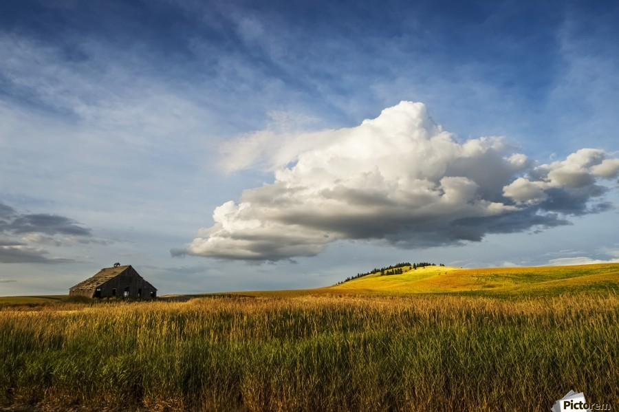 Wheat field and old wooden barn; Palouse, Washington, United States of America  Print