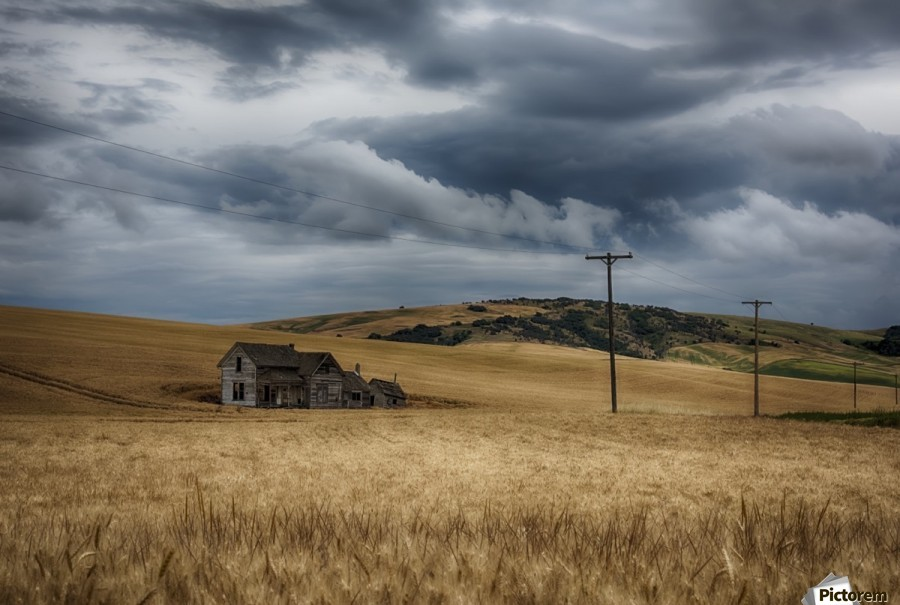 Old, rustic wooden house in the middle of a golden field under a stormy sky; Palouse, Washington, United States of America  Print