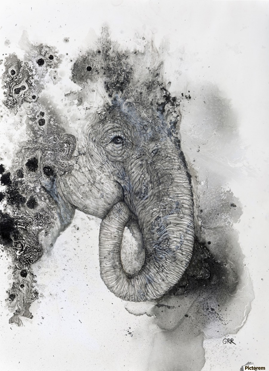 Illustration of an elephant's head  Print