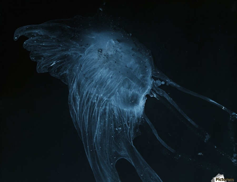 Glowing blue jellyfish in the dark water  Print