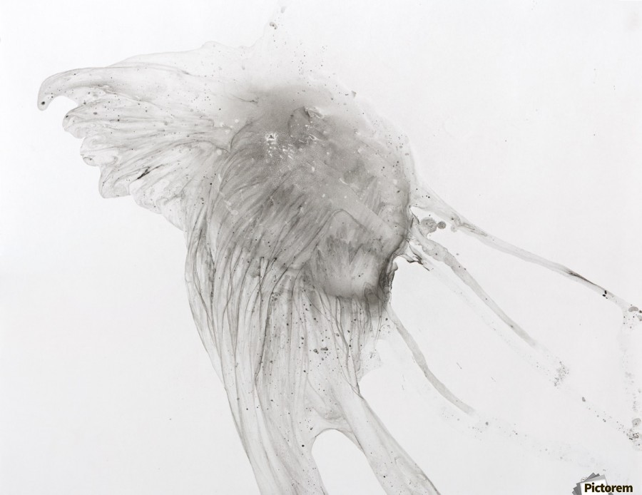 Jellyfish against a white background  Imprimer