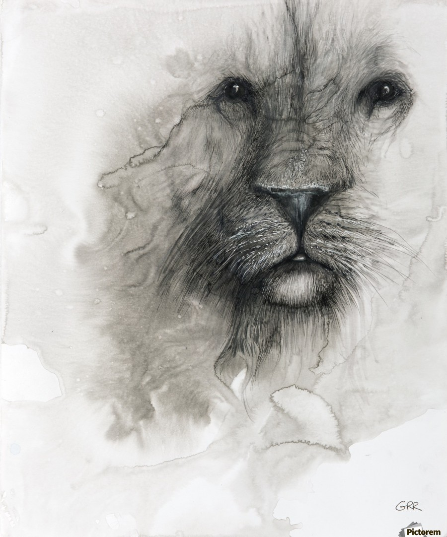 Illustration of a lion's face on a white background  Print