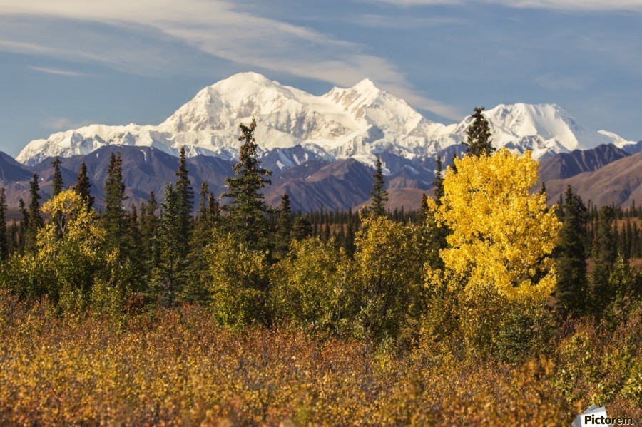 Denali, viewed from south of Cantwell, from the Parks Highway in Interior Alaska; Alaska, United States of America  Print