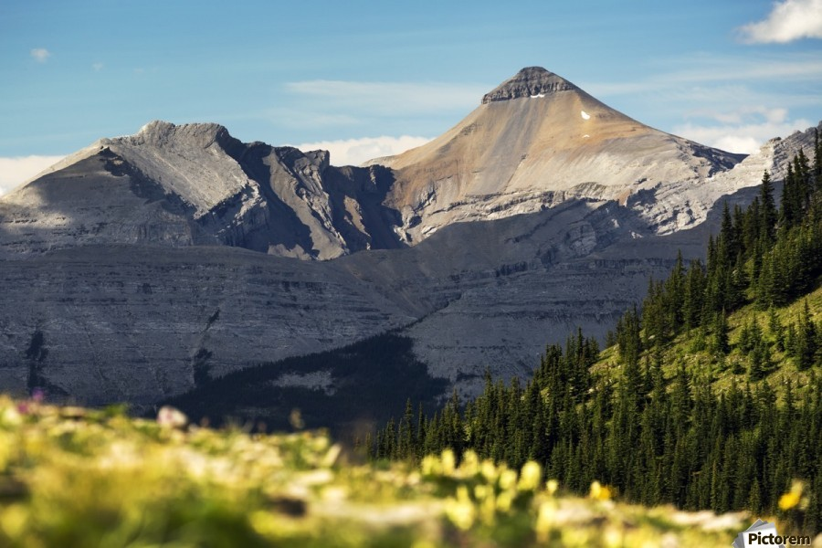 Mountain range with wildflowers on hillside in the foreground and blue sky; Bragg Creek, Alberta, Canada  Print