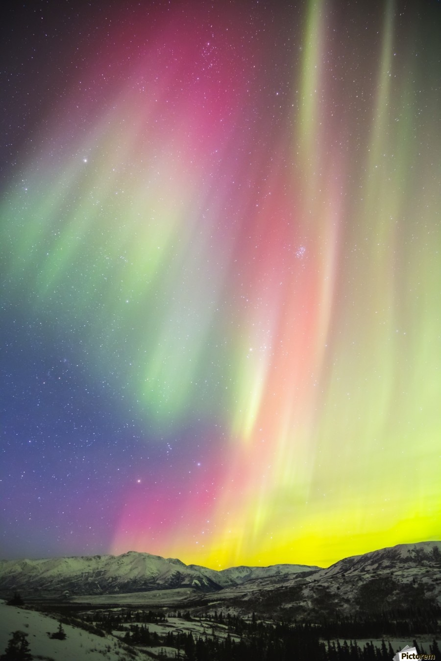 A colourful aurora display over Granite Mountain, south of Delta Junction; Alaska, United States of America  Print