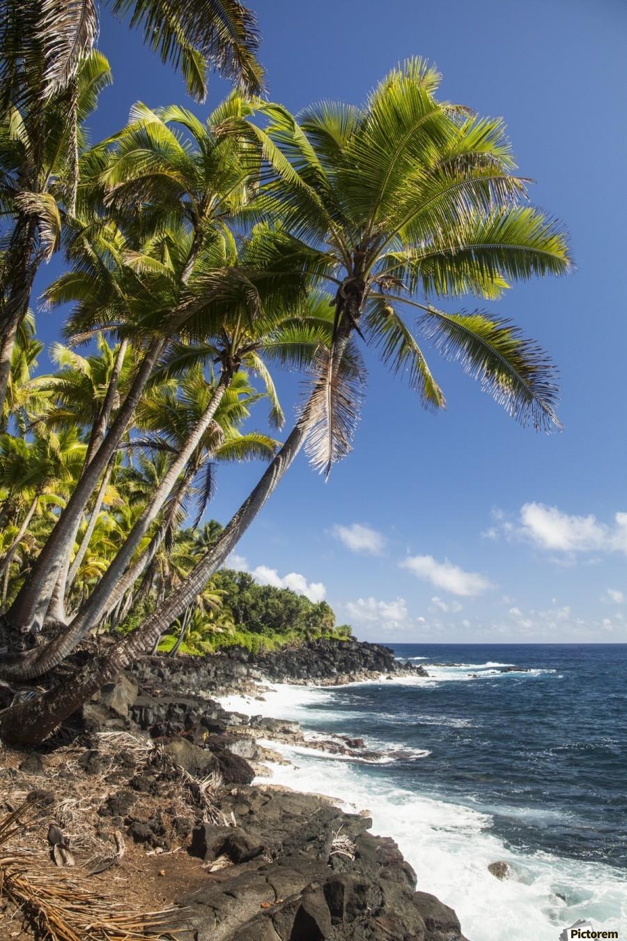 Palm trees along the Puna coastline, near Kalapana; Island of Hawaii, Hawaii, United States of America  Print