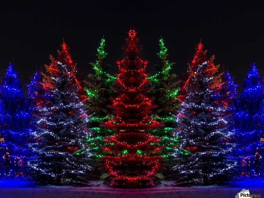 Colourful Christmas lights around several evergreen trees; Calgary, Alberta, Canada  Print