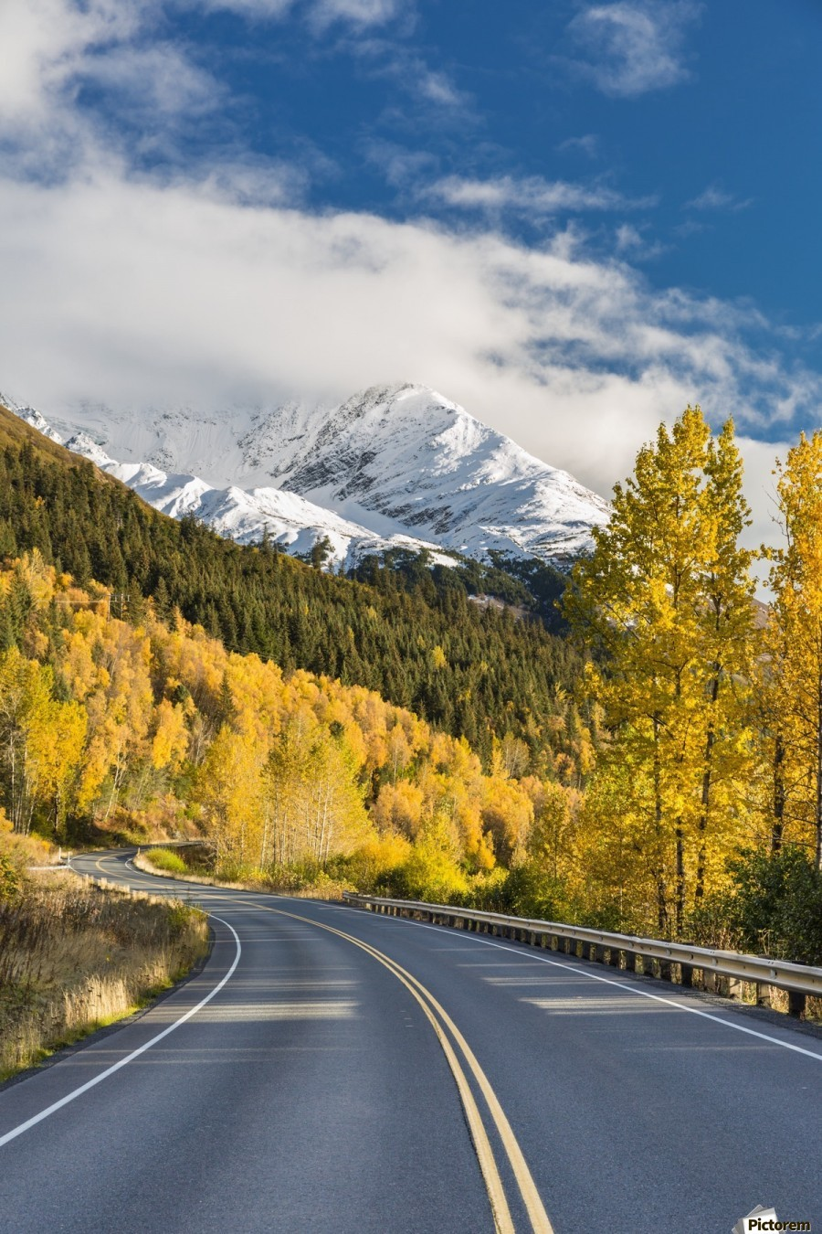 Snow-capped Kenai Mountains dwarf the Seward highway, trees covered in yellow leaves in autumn line the road, South-central Alaska; Seward, Alaska, United States of America  Print