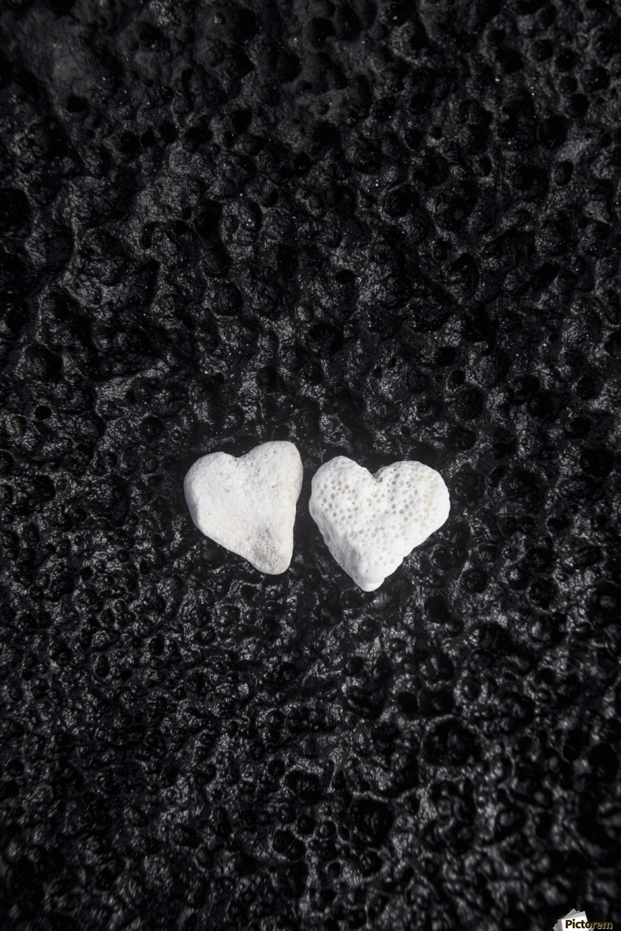 Two white coral heart shaped rocks placed together on a wet lava rock near the ocean; Honolulu, Oahu, Hawaii, United States of America  Print