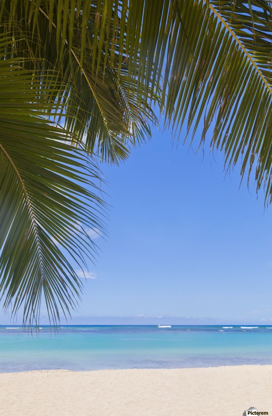 Beautiful clear day on a white sandy beach with coconut palm tree fronds hanging above; Honolulu, Oahu, Hawaii, United States of America  Print