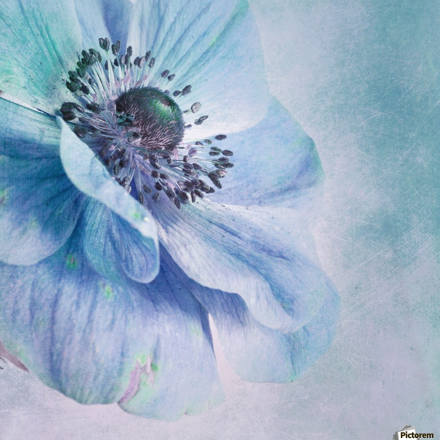 Shades of Blue by Priska Wettstein   Print