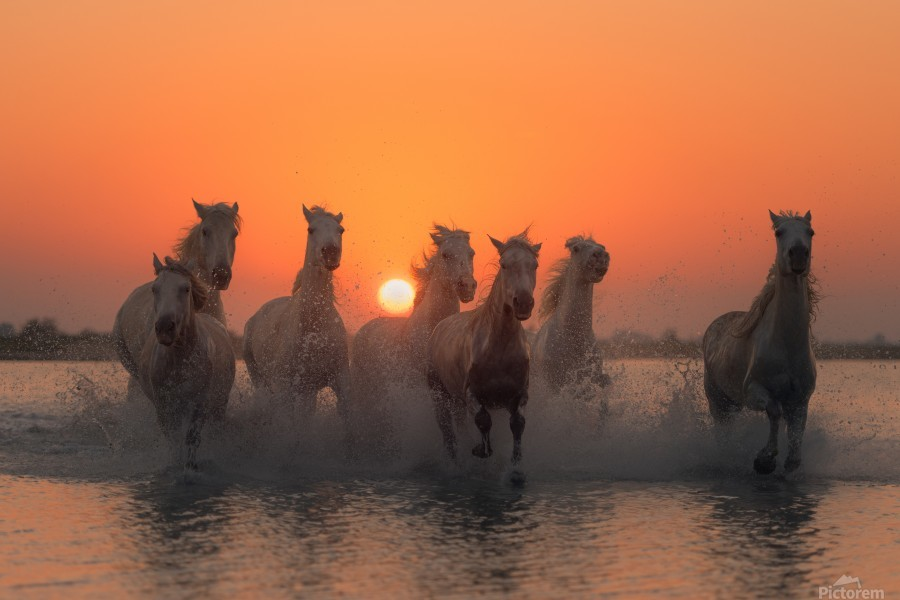 Sunset in Camargue  Print