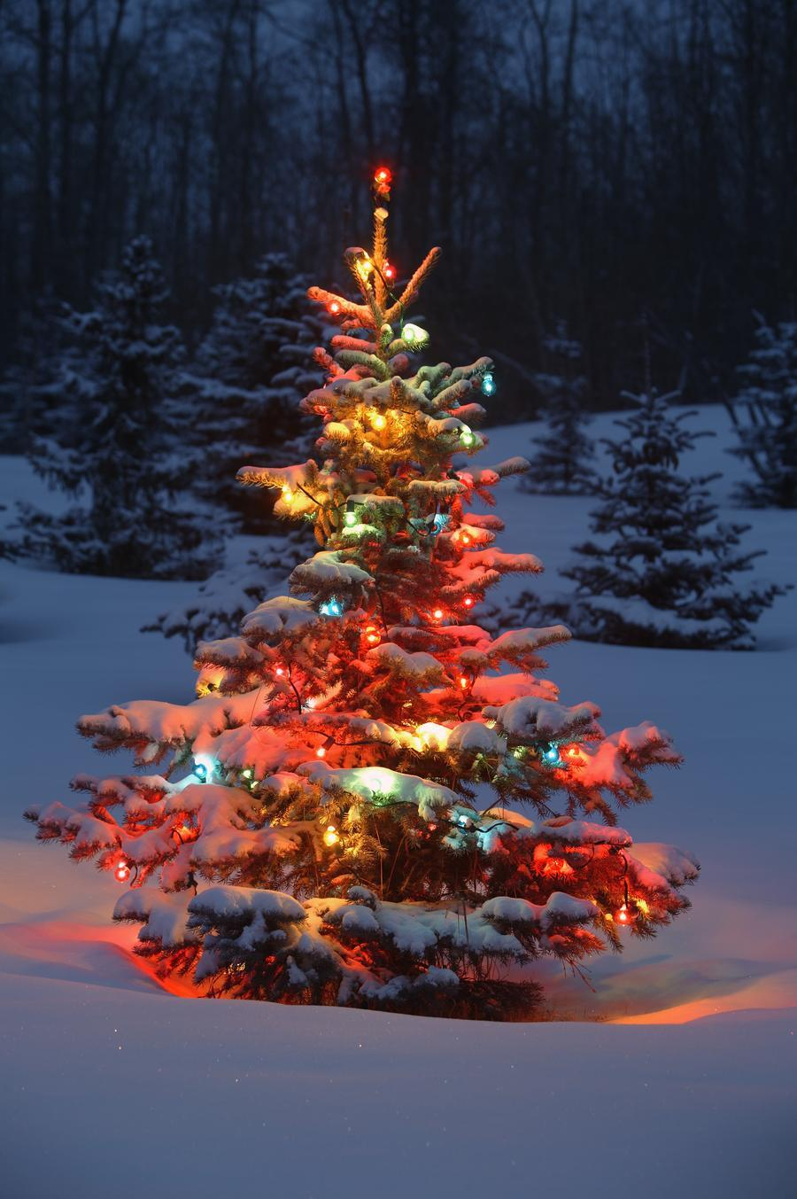 Christmas Tree With Lights Outdoors In The Forest  Print