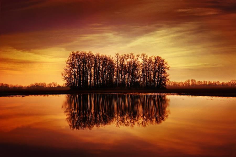 Silhouetted Trees Reflected On Water  Print