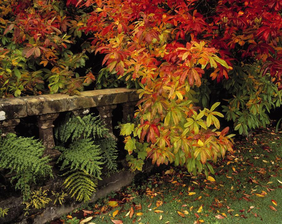 Balustrades & Autumn Colours, Castlewellan, Co Down, Ireland  Print