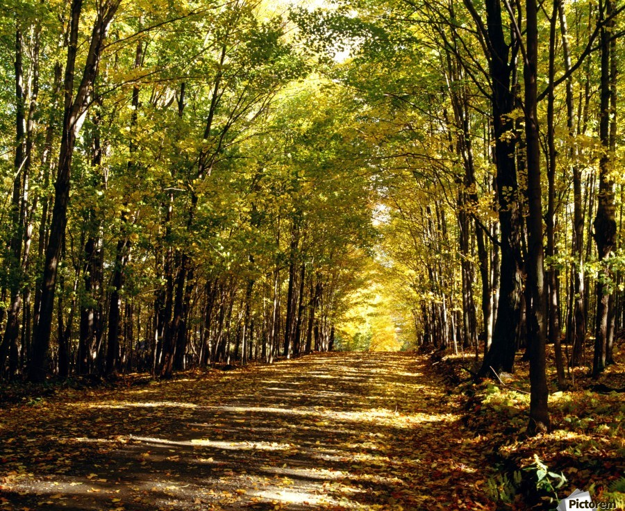 Tree Lined Road In Autumn  Print