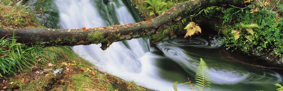 Ireland; Waterfall  Print