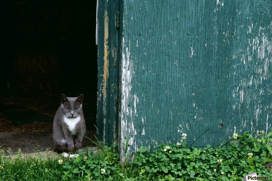 Cat In A Doorway  Print