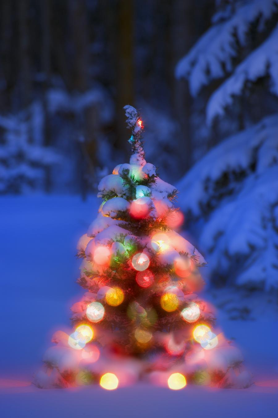 Illuminated Christmas Tree In A Forest  Print