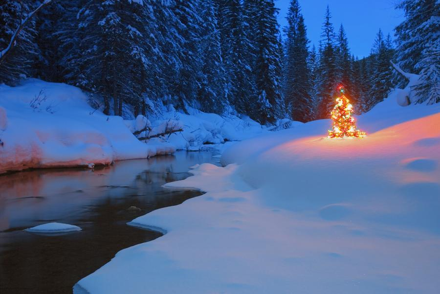 Glowing Christmas Tree By Mountain Stream  Print